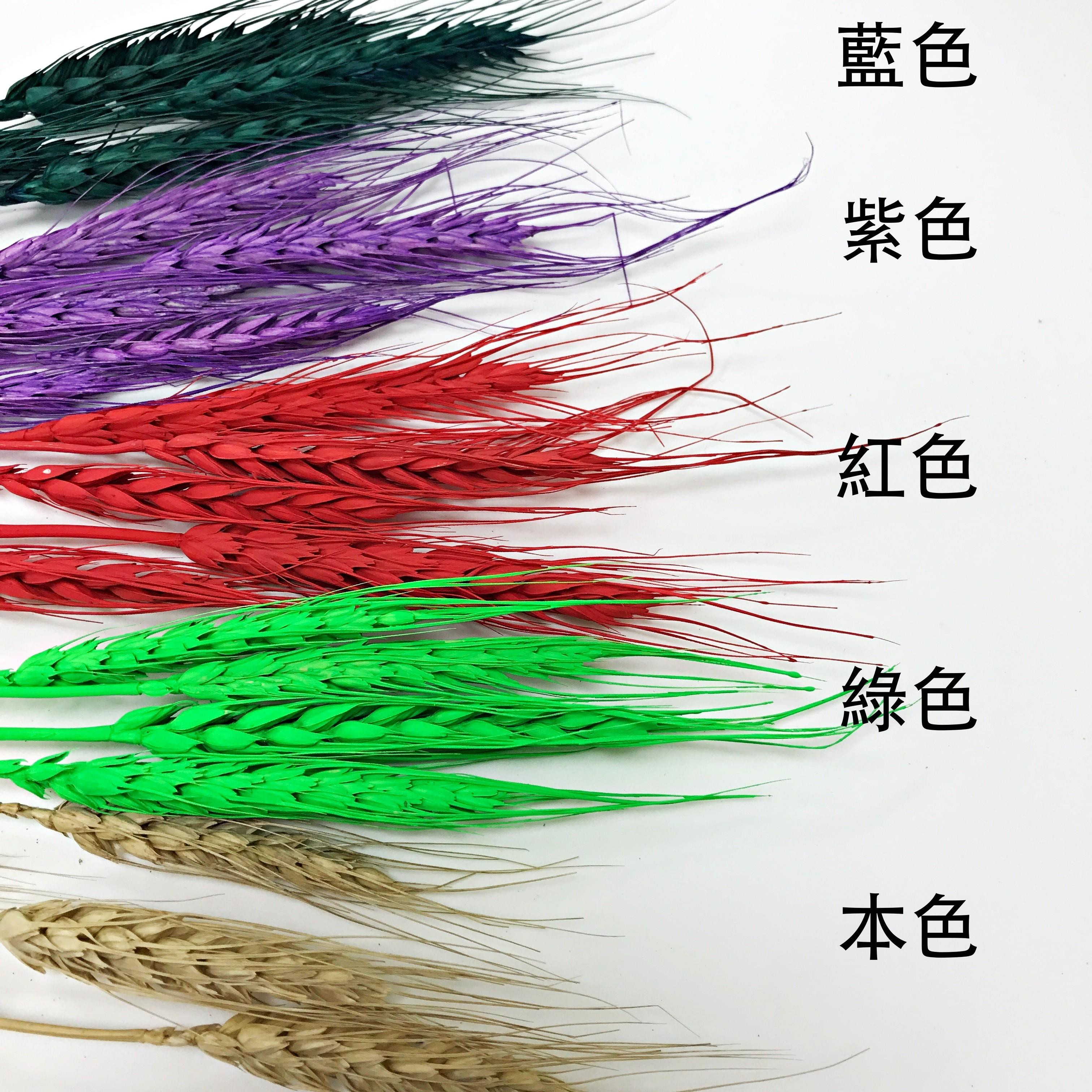 花束系列-麥穗