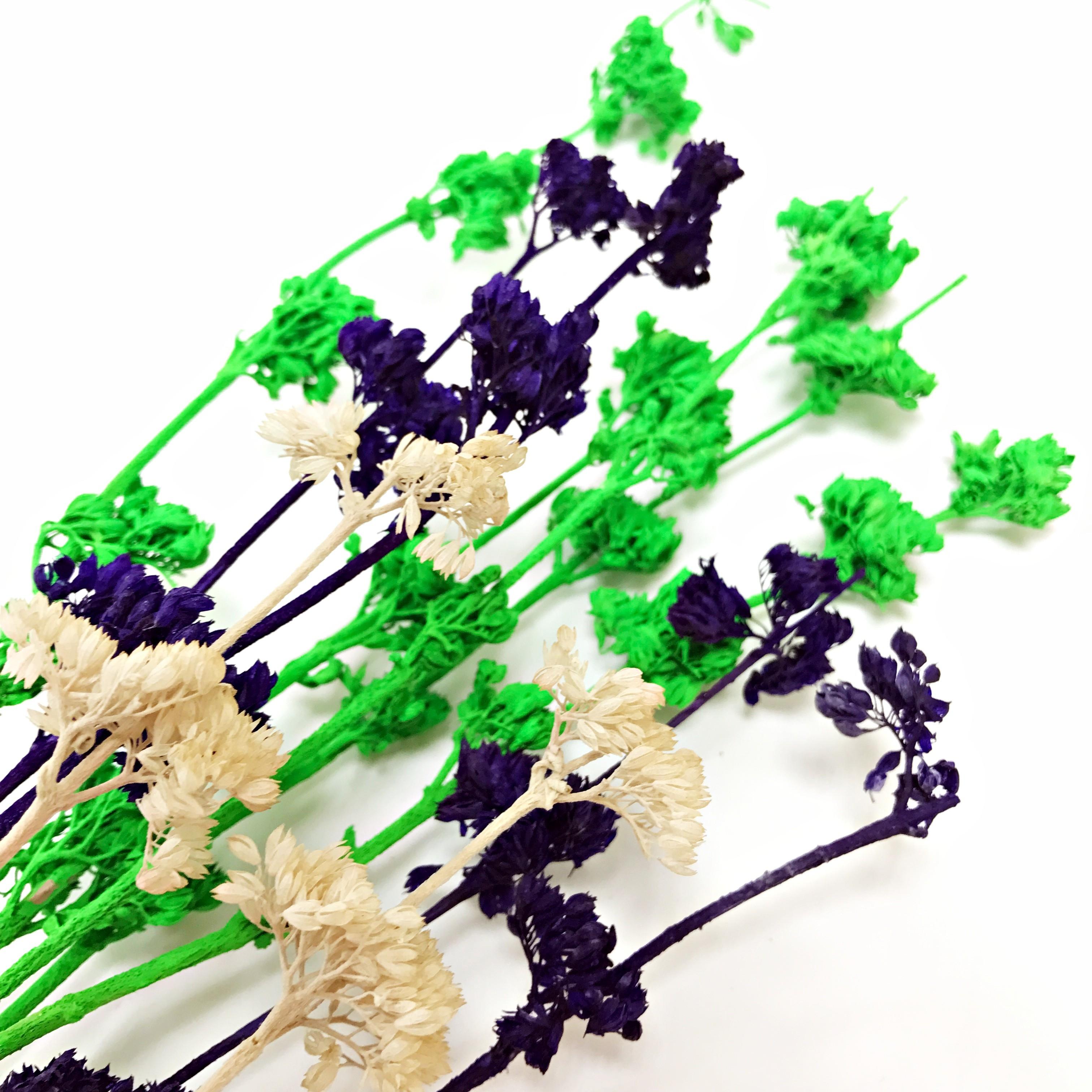 花束系列-貴賓花