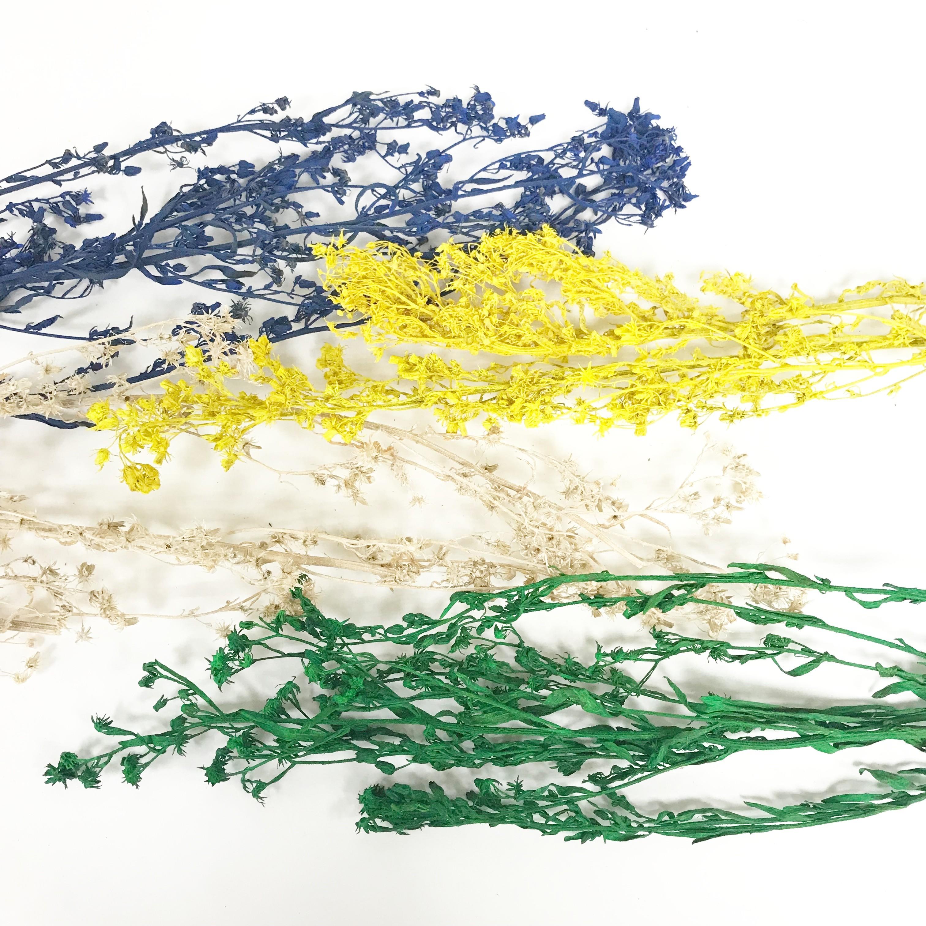 花束系列-五月草