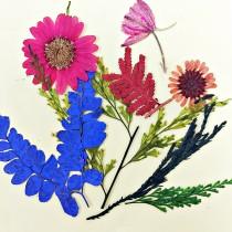 小花束系列-壓花