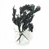 小花系列-小松樹