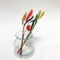 小花系列-小珍珠草