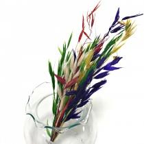 小花系列-小燕麥