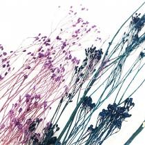 花束系列-木滿天星