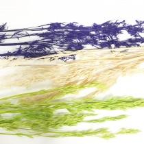 花束系列-竿蓁花