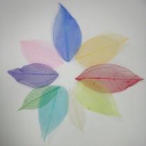 小花系列-彩色網葉